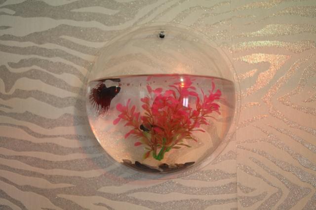 img 8647 - Des aquariums originaux pour votre déco